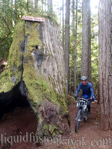 Mountain biking in Mendocino Jackson State Forest