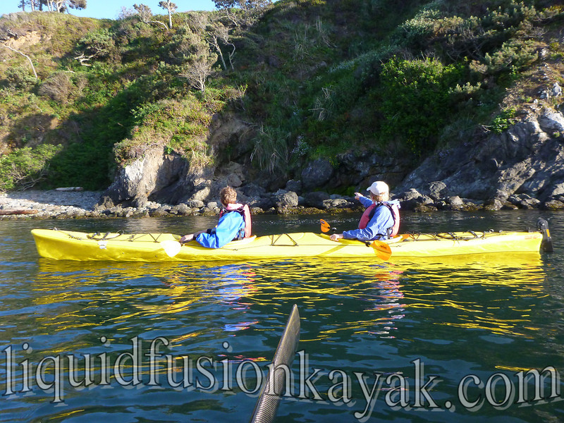 kayak, tour, family, mendocino, wildlife, birding,